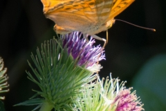 butterfly-s10