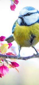Xiaomi Redmi Note 8 nature wallpaper bird